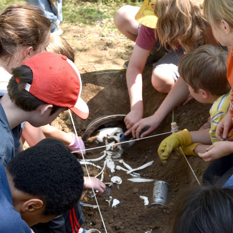 Archaeology Camp Bones in Dirt