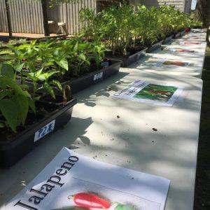 Plant Sale Plants on Table
